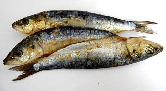 sardines-2240180_1280-1-compressor.jpg